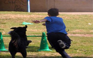 לימודים בכלבים בשירות אנשים